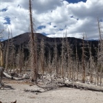 Dead forest near Horseshoe Lake.  Excessive C02 released from the a crack in the earth caused by an earthquake.